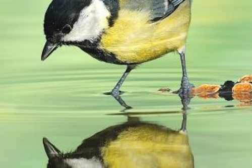 bird-2000x708